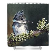 Kingfisher II Shower Curtain