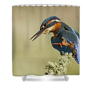 Kingfisher Itch Shower Curtain