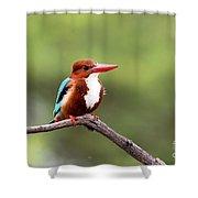 Kingfisher On A Limb Shower Curtain