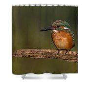 Kingfisher On Sunrise Shower Curtain