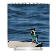 Kingfisher On The Dock Shower Curtain