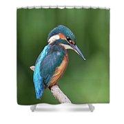 Kingfisher Watching Below Shower Curtain