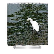 Kingston Jamaica Egret Shower Curtain