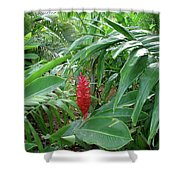 Kingston Jamaica Foliage Shower Curtain