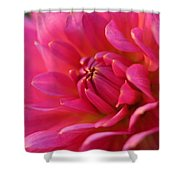 Kiss Of Pink Shower Curtain