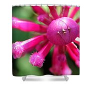 Kissing Flower Shower Curtain