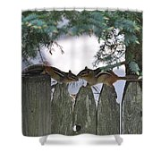 Kissing On A Fence Shower Curtain