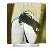 Kissing Pennguins Shower Curtain