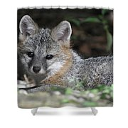 Kit Fox1 Shower Curtain
