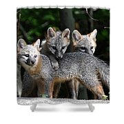 Kit Fox10 Shower Curtain