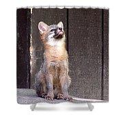 Kit Fox11 Shower Curtain
