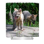 Kit Fox12 Shower Curtain