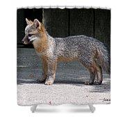 Kit Fox14 Shower Curtain