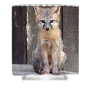 Kit Fox15 Shower Curtain