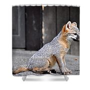 Kit Fox2 Shower Curtain