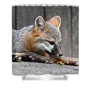 Kit Fox3 Shower Curtain