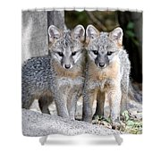 Kit Fox6 Shower Curtain