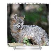 Kit Fox7 Shower Curtain
