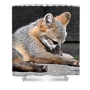 Kit Fox8 Shower Curtain