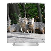 Kit Fox9 Shower Curtain