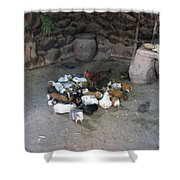 Kitchen Livestock 2 Shower Curtain