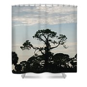 Kite In The Tree Shower Curtain