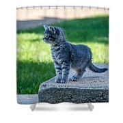 Kitten 1 Shower Curtain