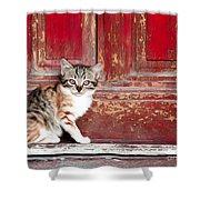 Kitten By Red Door Shower Curtain