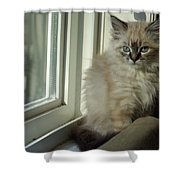 Kitten Daydreams Shower Curtain