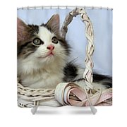 Kitten In Basket Shower Curtain