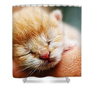Kitten In Hand Shower Curtain