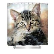 Kitten Looking Shower Curtain