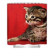 Kitten On Red Shower Curtain