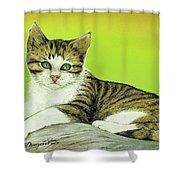 Kitten On Rock Shower Curtain