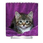 Kitten, Purr-fect In Purple Shower Curtain