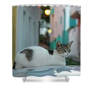 Kitten Reflections Shower Curtain