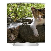 Kittens On A Wall Shower Curtain