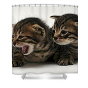 Kittens  Shower Curtain
