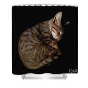Kitty Cat Curls Up Shower Curtain