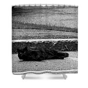 Kitty In The Street Black And White Shower Curtain