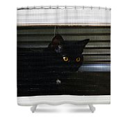 Kitty In The Window 2 Shower Curtain