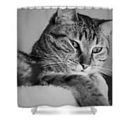 Kitty Lounge Shower Curtain