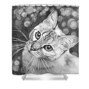 Kitty The Cat Shower Curtain