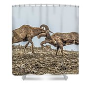 Knocked Silly Shower Curtain