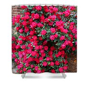 Knockout Red Rosebush Shower Curtain