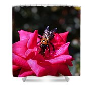 Knockout Rose And Bumblebee Shower Curtain