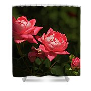 Knockout Roses Shower Curtain