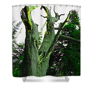 Knotty Tree Shower Curtain