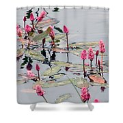 Knotweed Shower Curtain