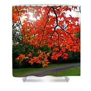 Knox Park 8444 Shower Curtain by Guy Whiteley